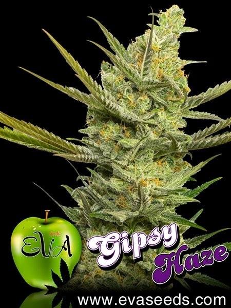 Семена конопли Gipsy Haze