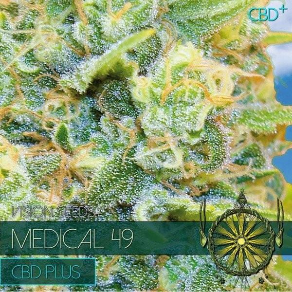 Сорт семян конопли Medical 49