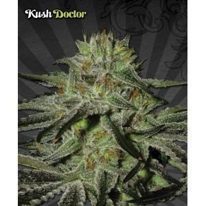 Auto Kush Doctor
