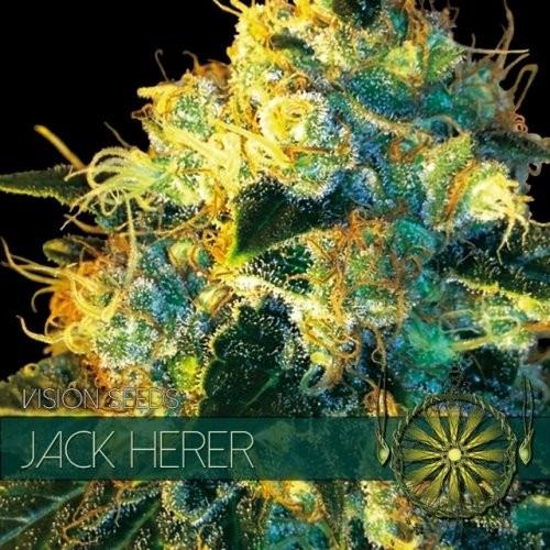 Сорт семян конопли Jack Herer