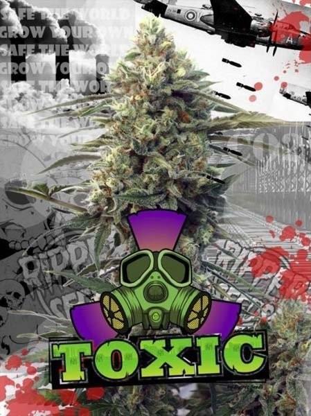 Семена конопли Toxic