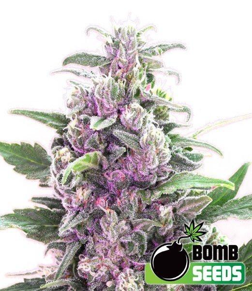 Семена конопли THC Bomb