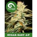 Auto Sugar Baby