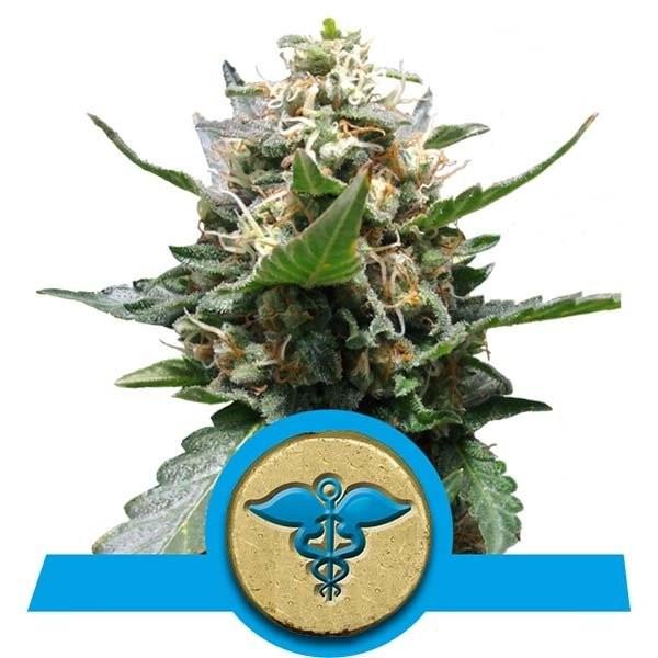 Семена конопли Royal Medic