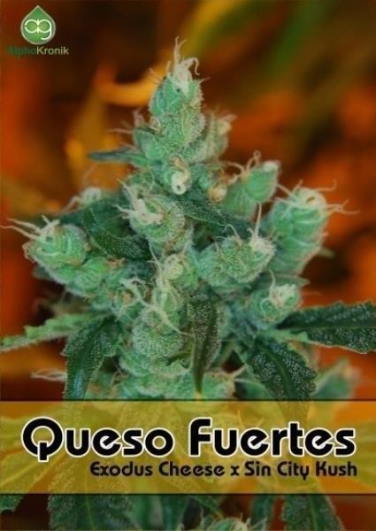 Семена конопли Queso Fuertes
