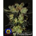 NY Purple Diesel