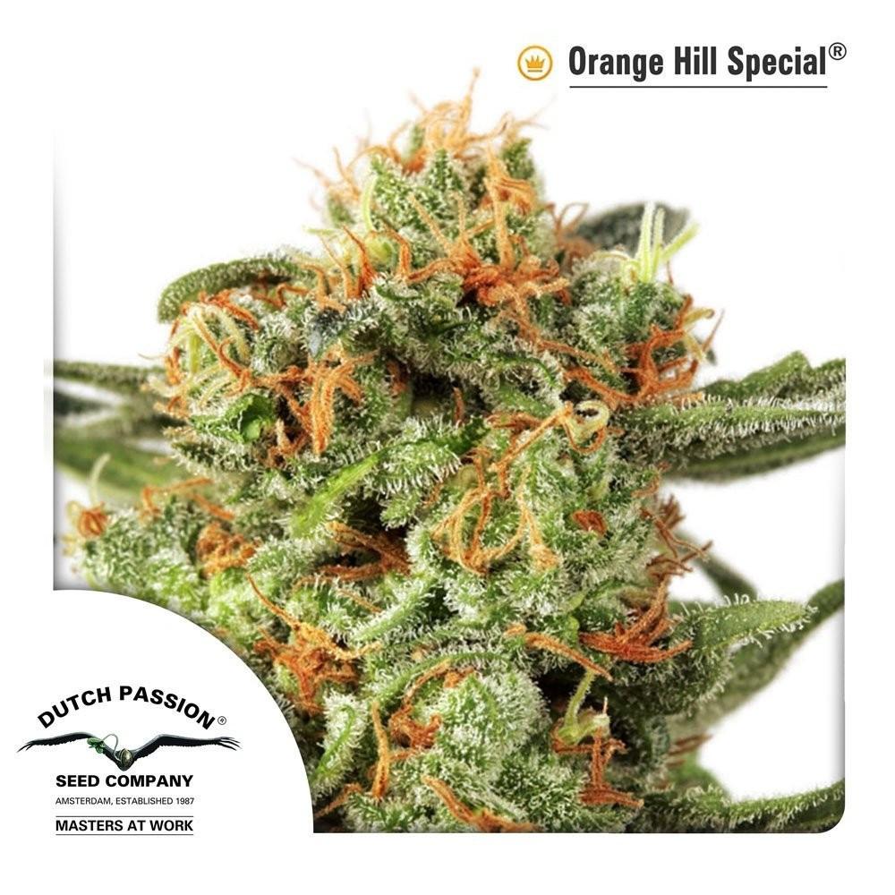 Семена конопли Orange Hill Special