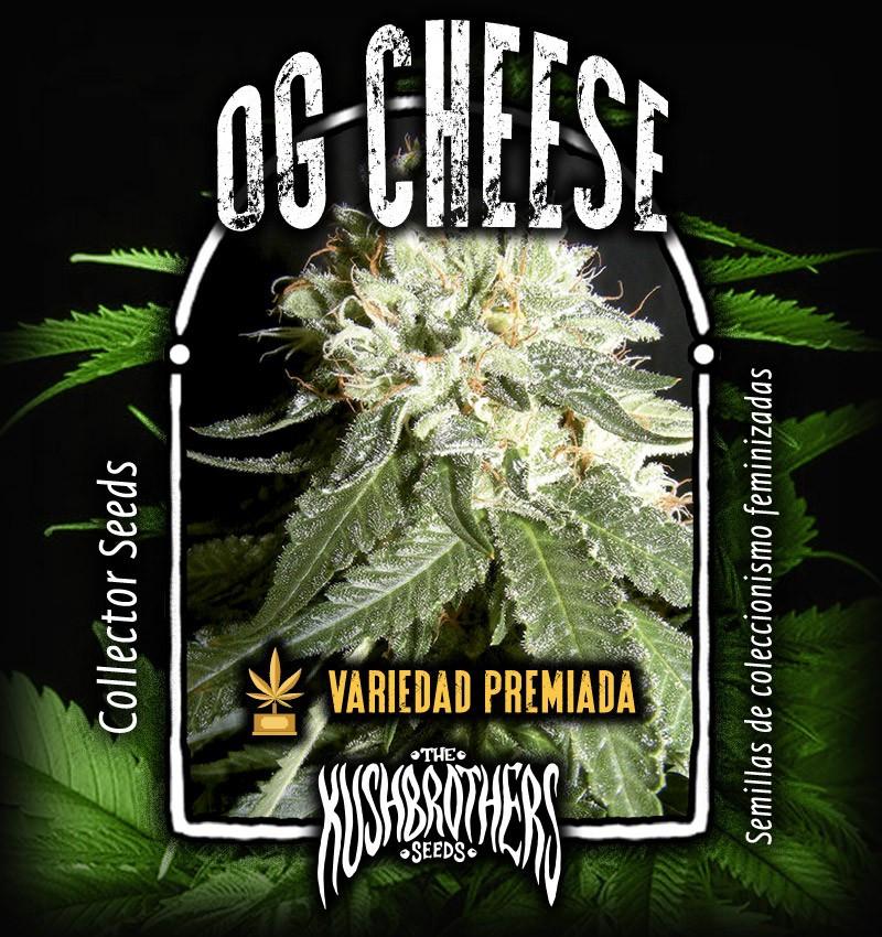 Сорт семян конопли OG Cheese