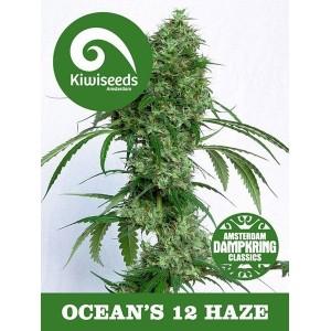 Ocean's Twelve Haze