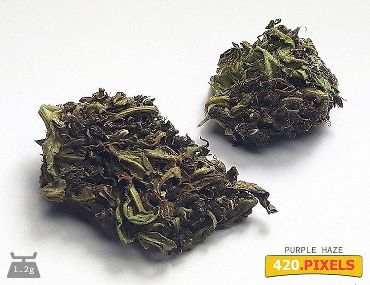 Сорт семян конопли Purple Haze