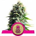 Pineapple Kush