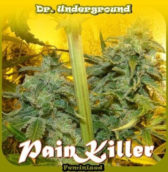 Семена конопли Painkiller