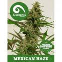 Mexican Haze