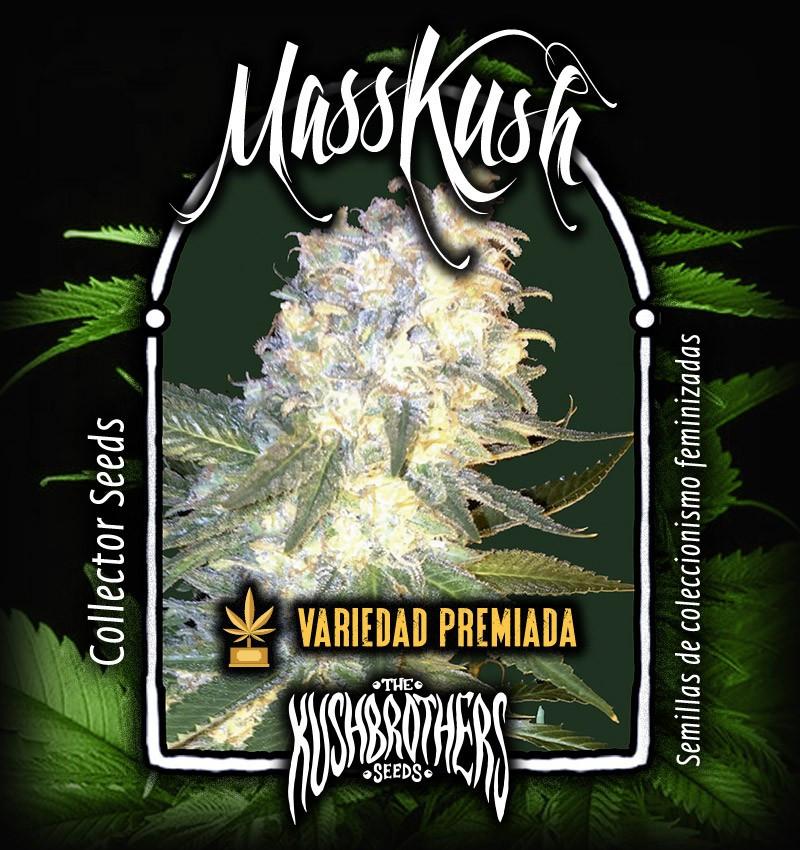 Семена конопли MassKush