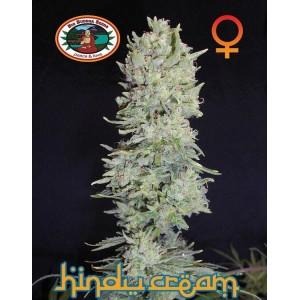 Hindu Cream