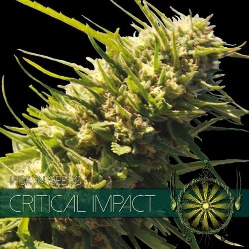 Семена конопли Critical Impact