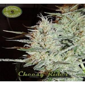 Семена конопли Cheesy Rider