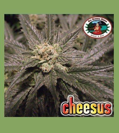 Семена конопли Cheesus