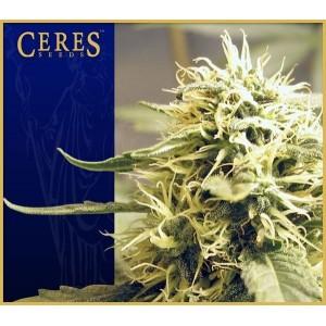 Ceres Kush