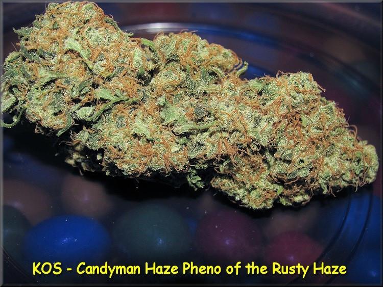 Сорт семян конопли Candyman Haze