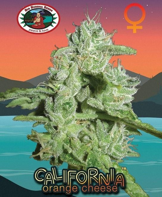 Семена конопли California Orange Cheese