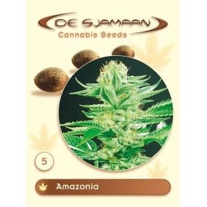 Семена конопли Amazonia