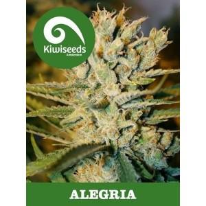 Семена конопли Alegria