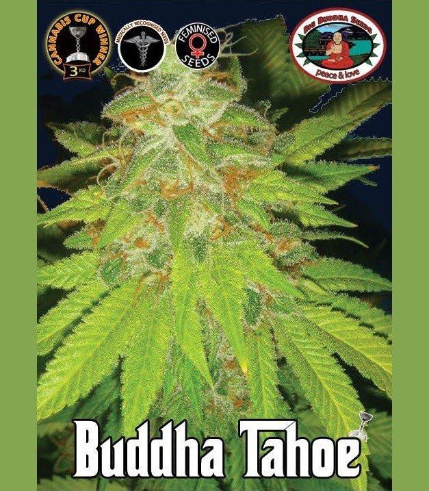 Семена конопли Buddha Tahoe