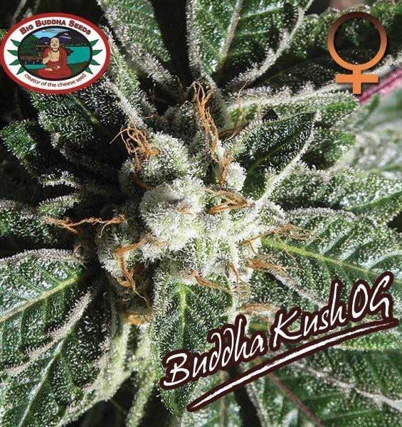 Семена конопли Buddha Kush OG