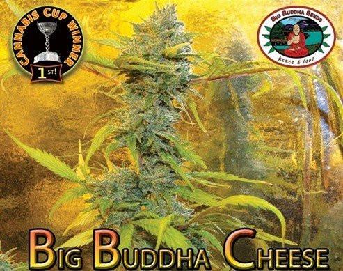 Семена конопли Big Buddha Cheese