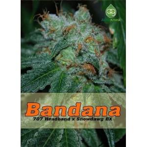 Семена конопли Bandana