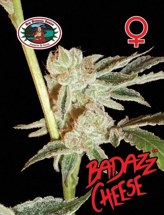 Семена конопли Badazz Cheese