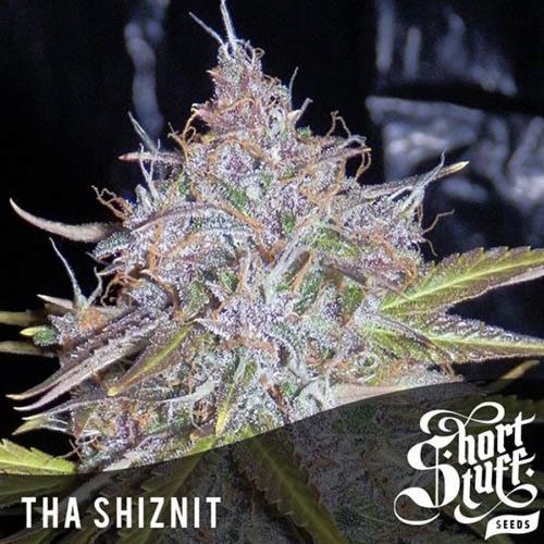 Семена конопли Tha Shiznit