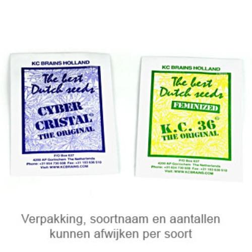 Сорт семян конопли Cyber Cristal