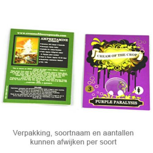 Сорт семян конопли Purple Paralysis
