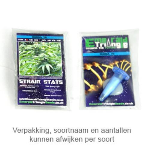 Сорт семян конопли Bubba 76