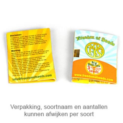 Сорт семян конопли Dr. Kush