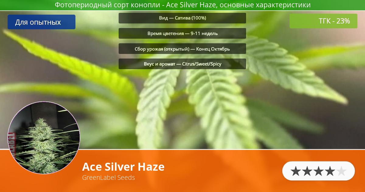 Инфограмма сорта Ace Silver Haze