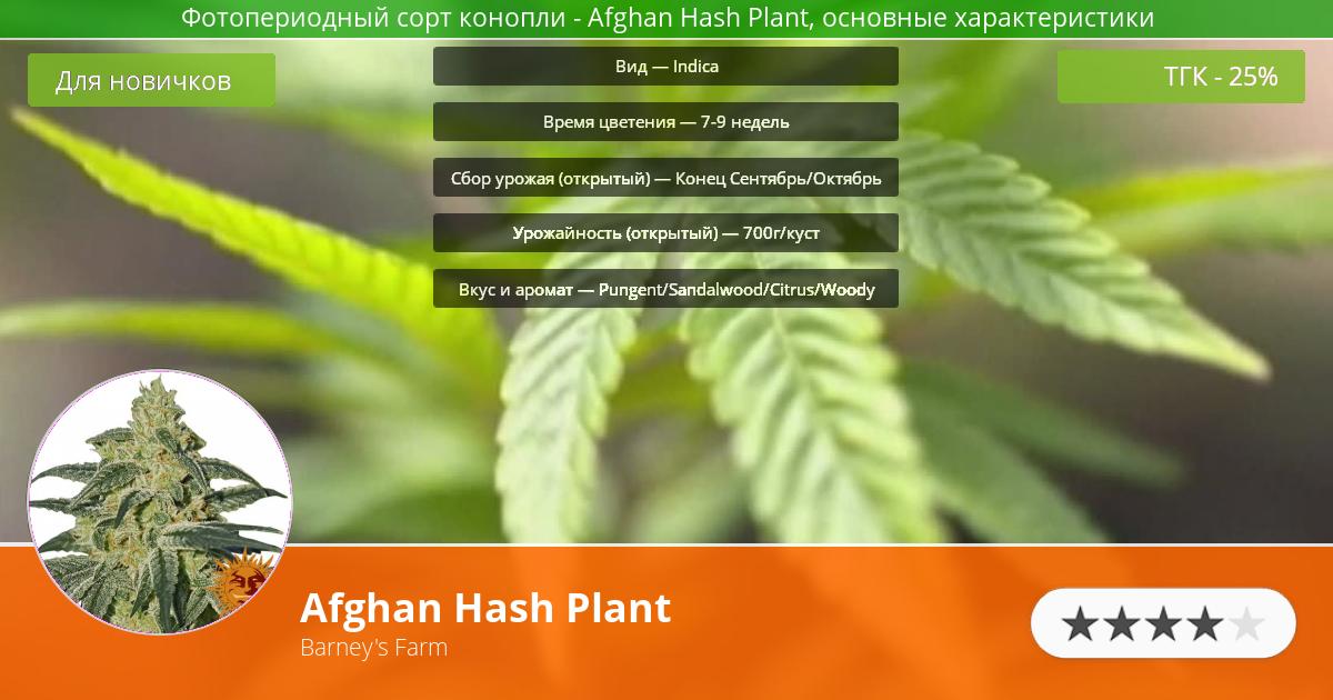 Инфограмма сорта марихуаны Afghan Hash Plant