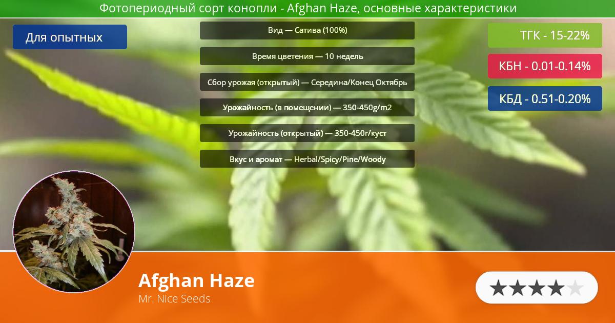 Инфограмма сорта марихуаны Afghan Haze