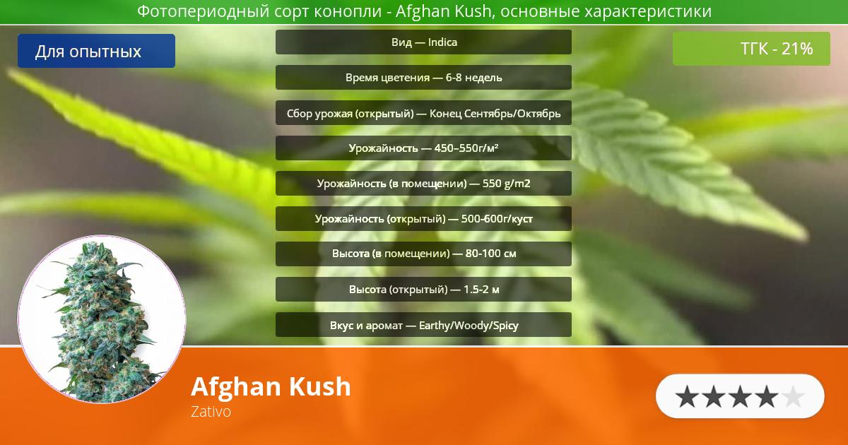 Инфограмма сорта марихуаны Afghan Kush