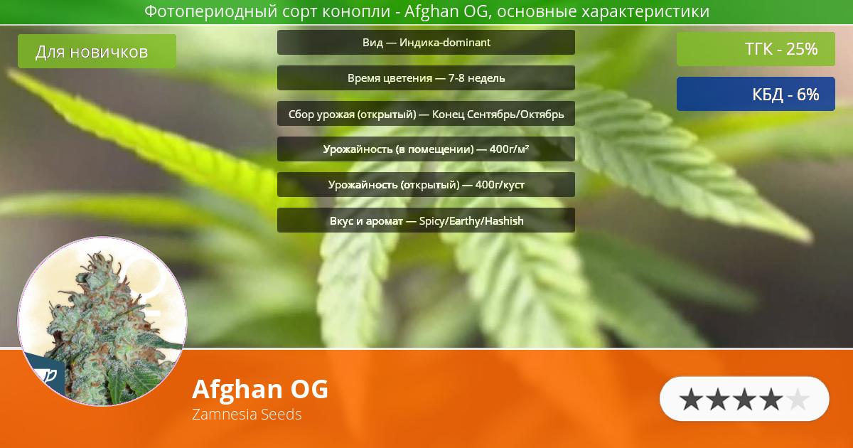 Инфограмма сорта марихуаны Afghan OG