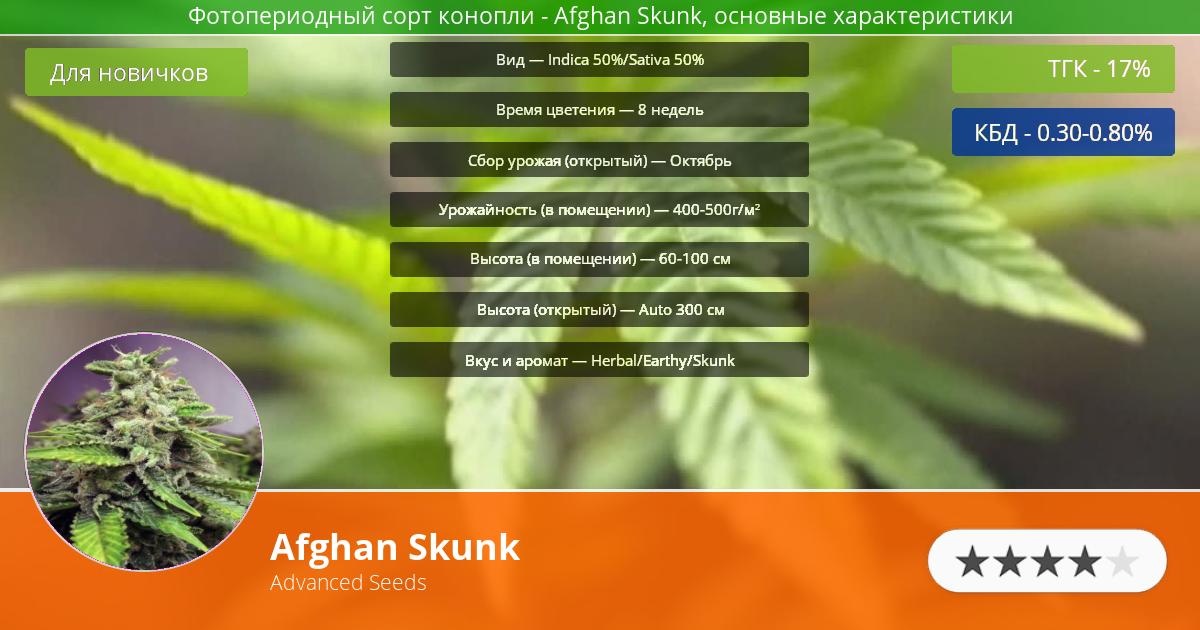 Инфограмма сорта марихуаны Afghan Skunk