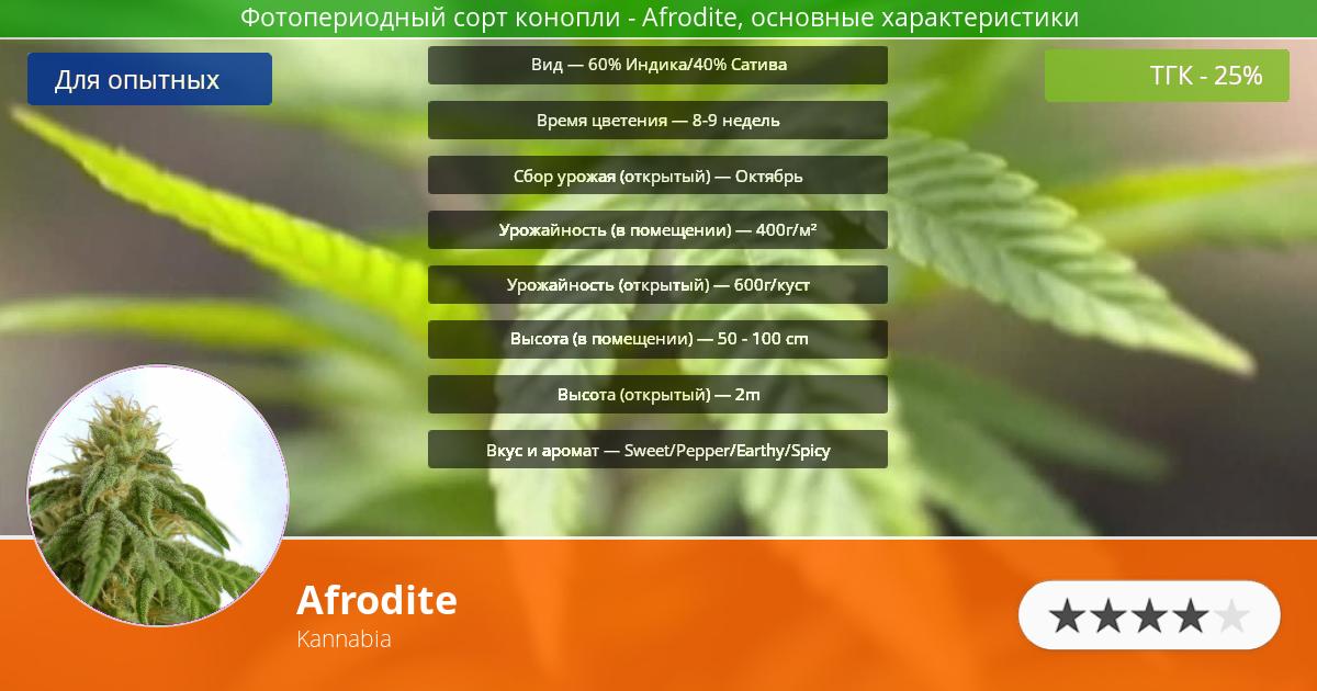 Инфограмма сорта марихуаны Afrodite