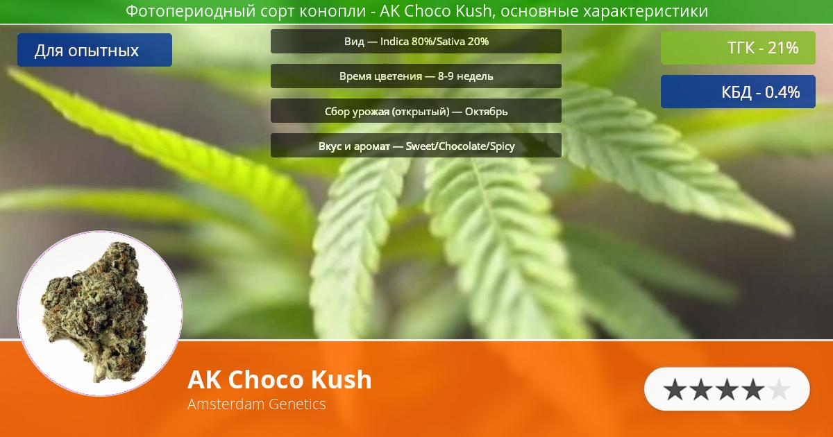 Инфограмма сорта марихуаны AK Choco Kush