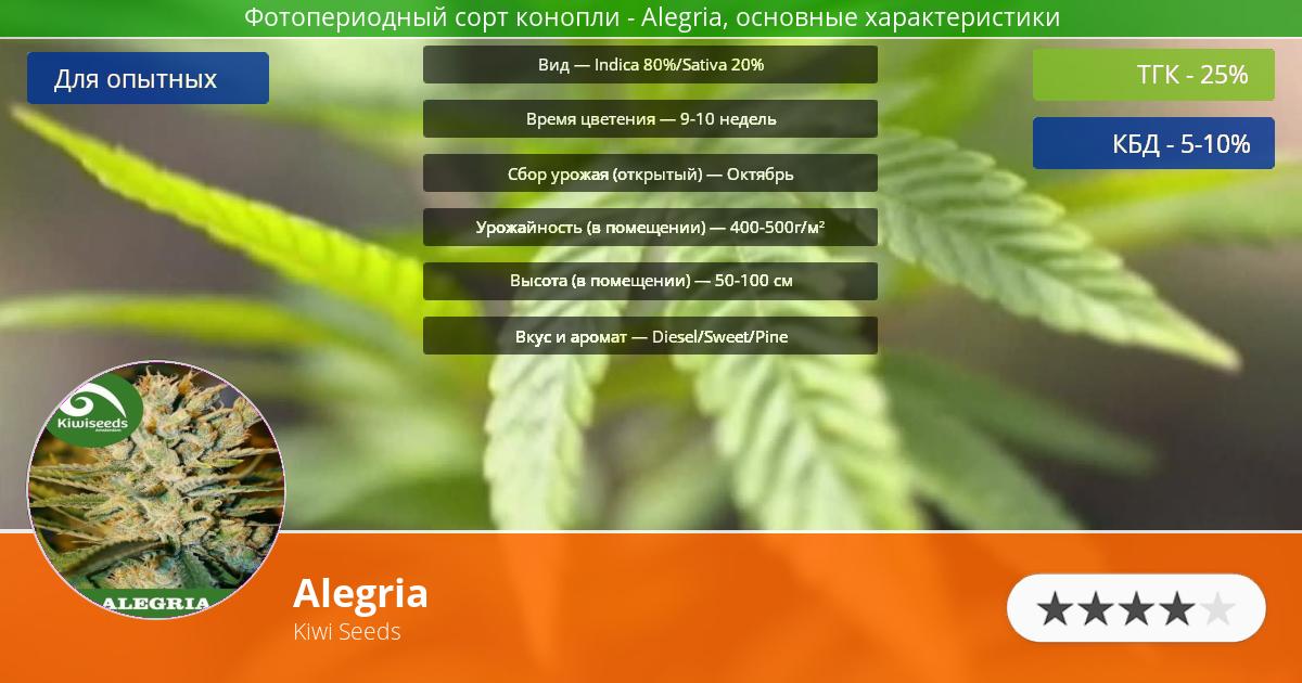 Инфограмма сорта марихуаны Alegria