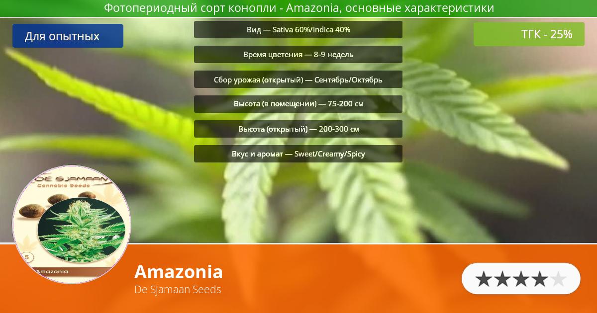 Инфограмма сорта марихуаны Amazonia