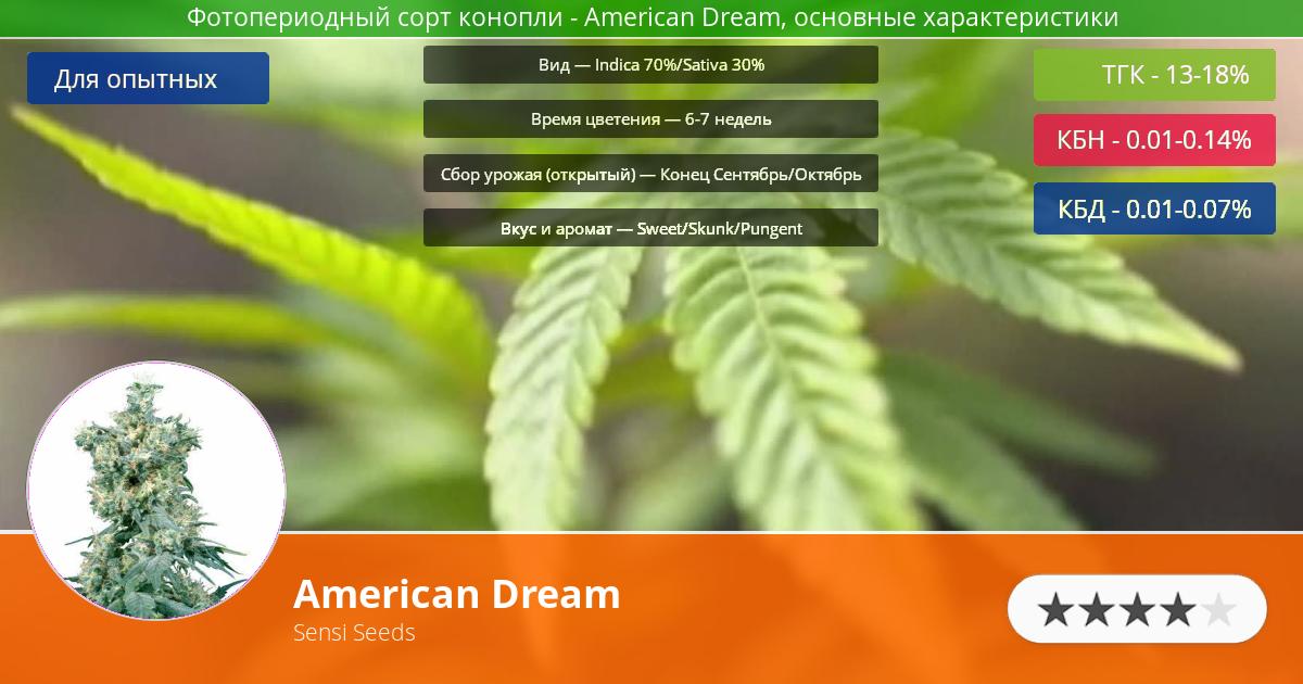 Инфограмма сорта марихуаны American Dream