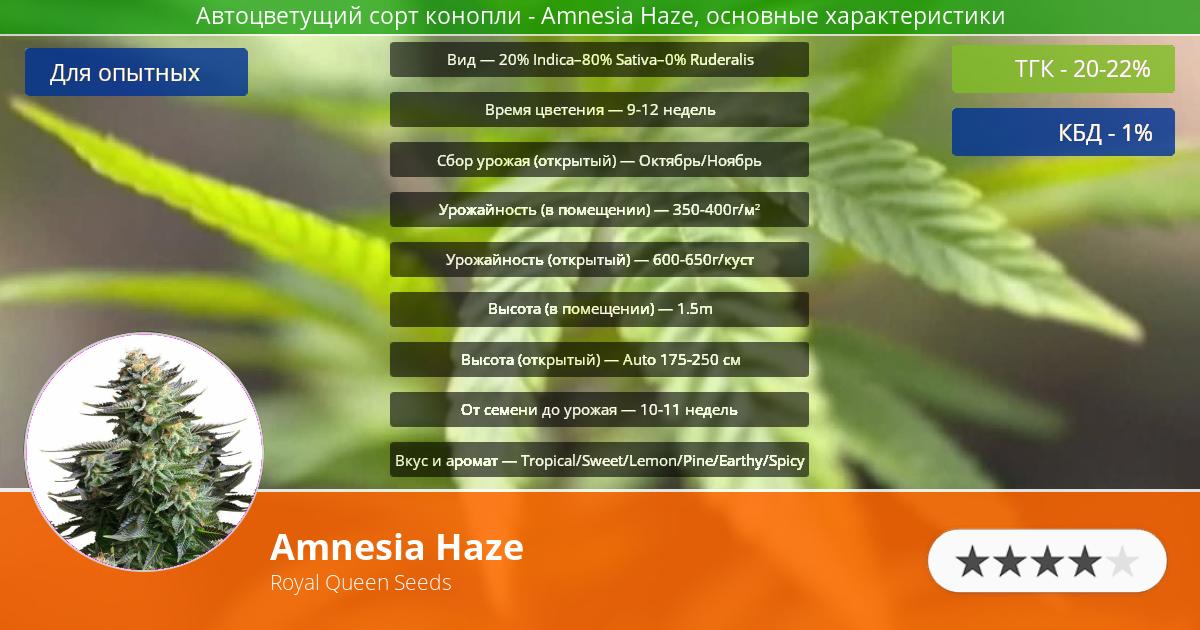 Инфограмма сорта марихуаны Amnesia Haze