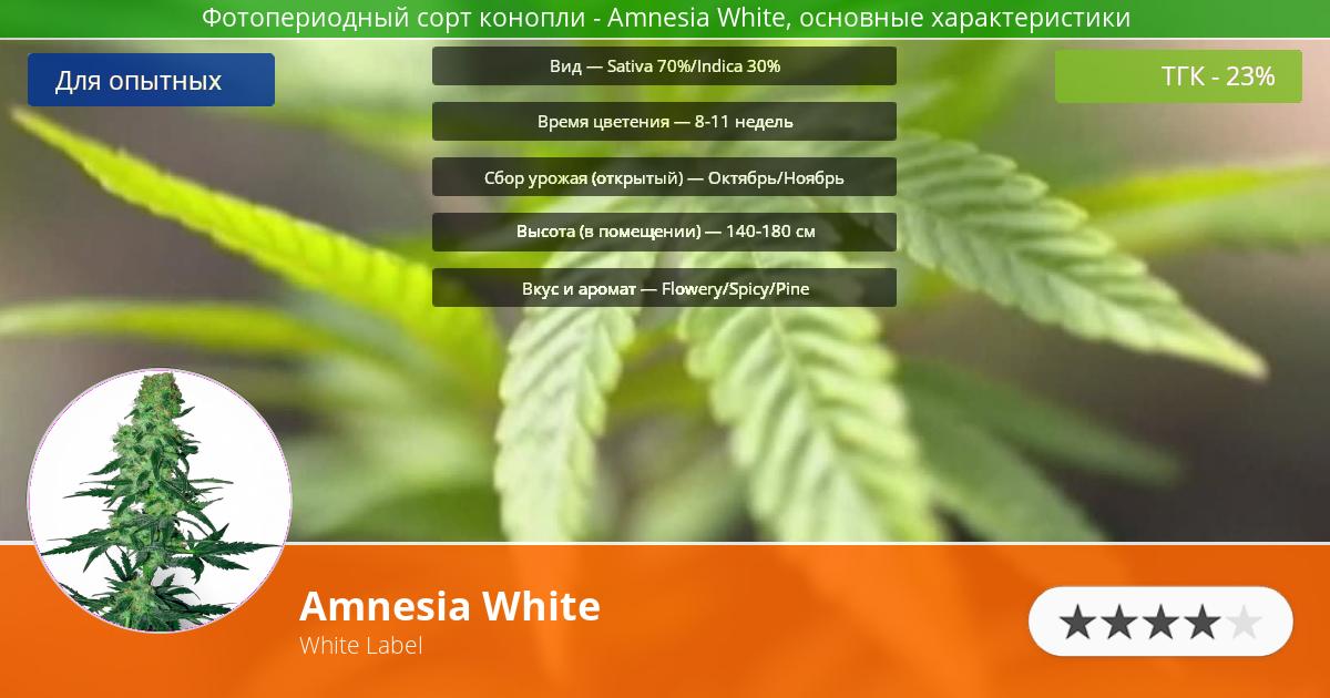 Инфограмма сорта марихуаны Amnesia White